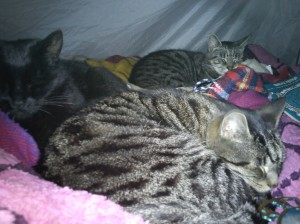 Olly, Tiggy and Rowan camping
